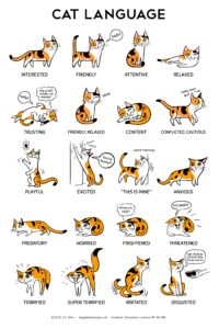 Cat Body Language