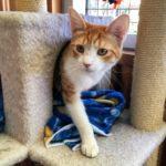 cat seeks cat trainer