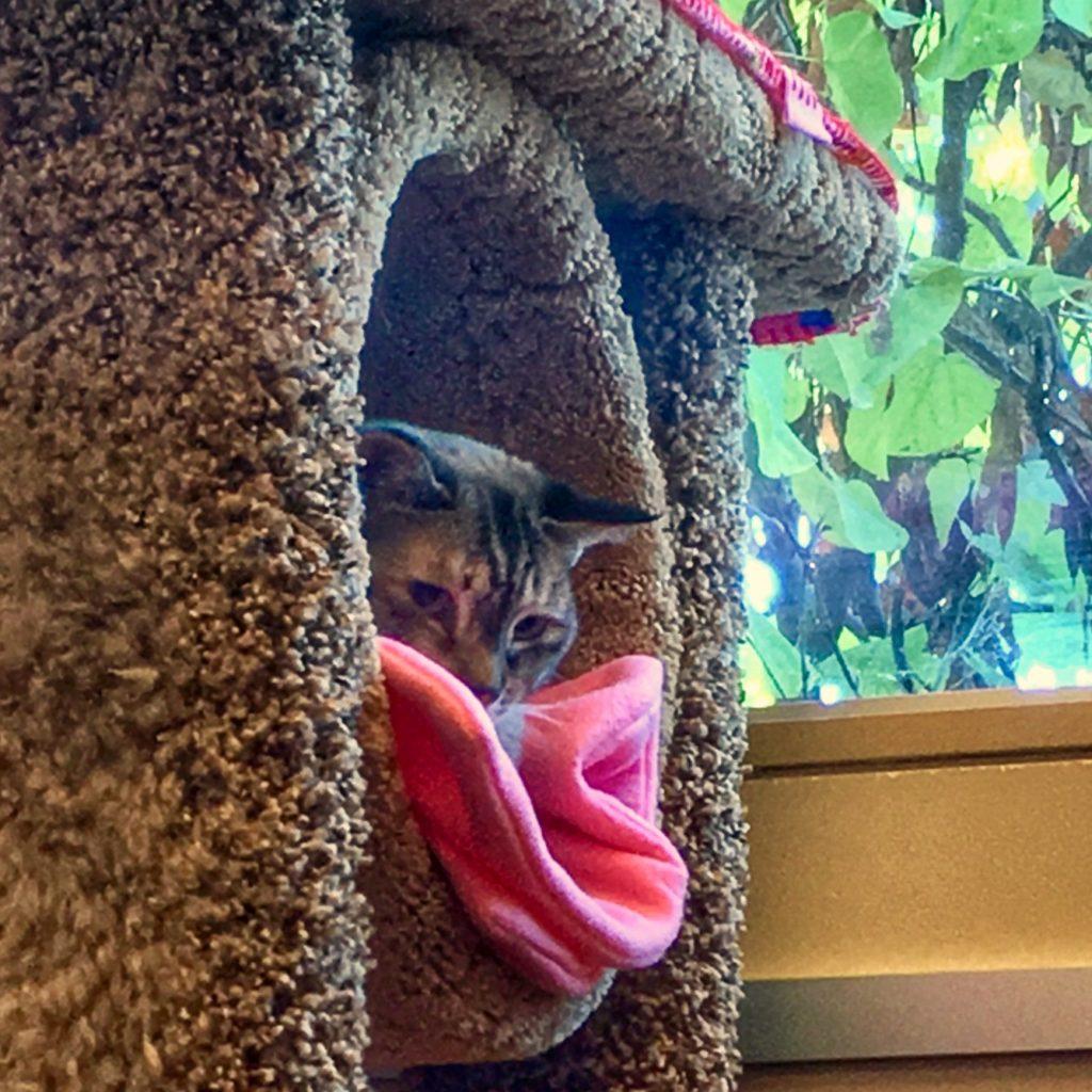 Shy cat hiding in tree