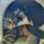 Cats who get along will share resources like sleeping spaces.