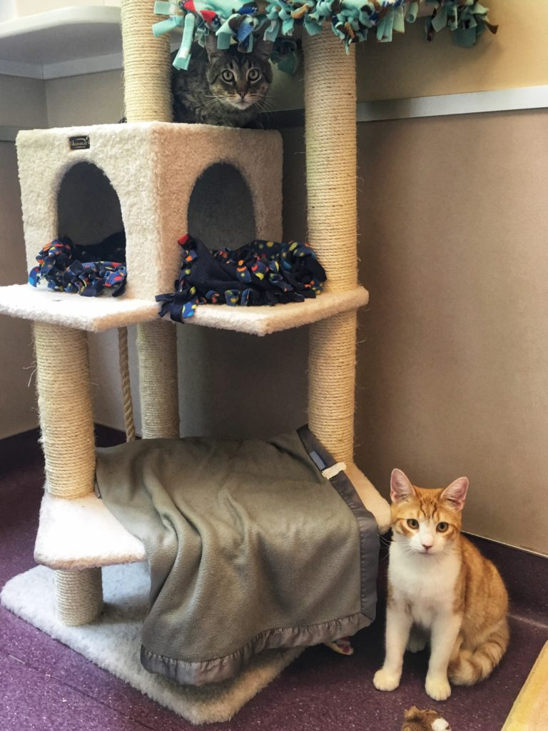 Cat trees help increase vertical space and decrease conflict