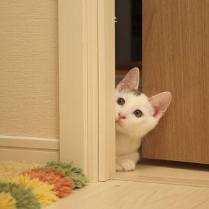 Cat Peeking Through Open Door