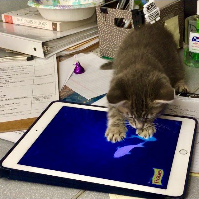 Kitten playing game on iPad