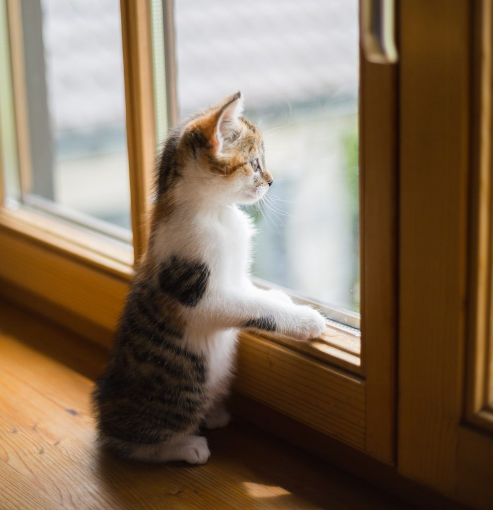 kitten looking through window