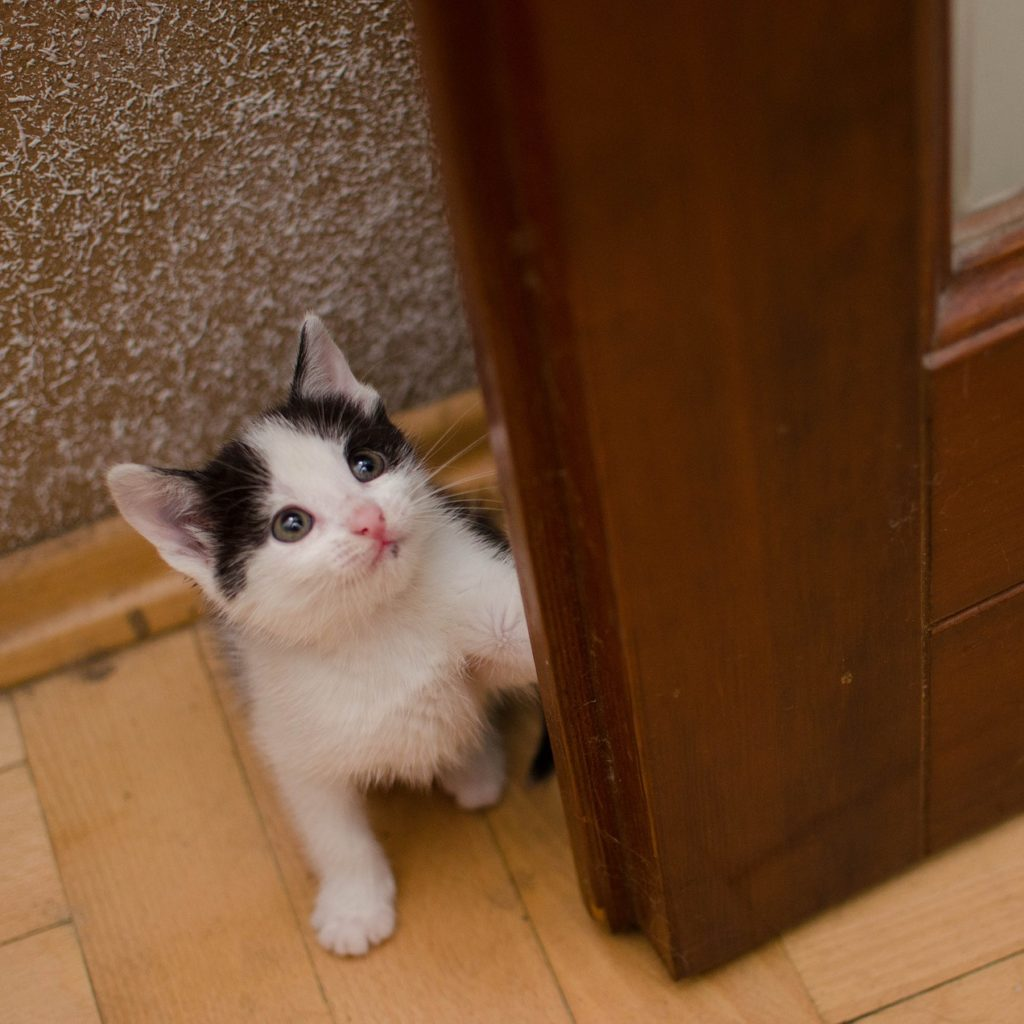 Kitten in Doorway Looking Up