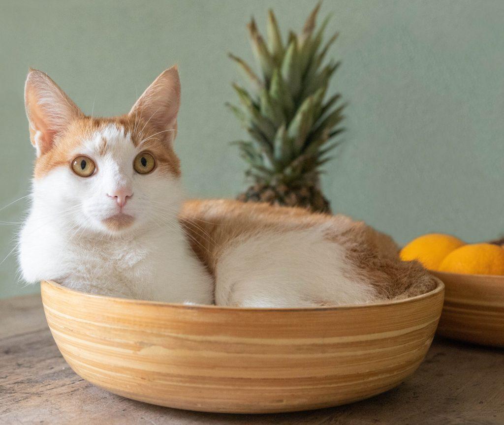Cat laying in fruit bowl