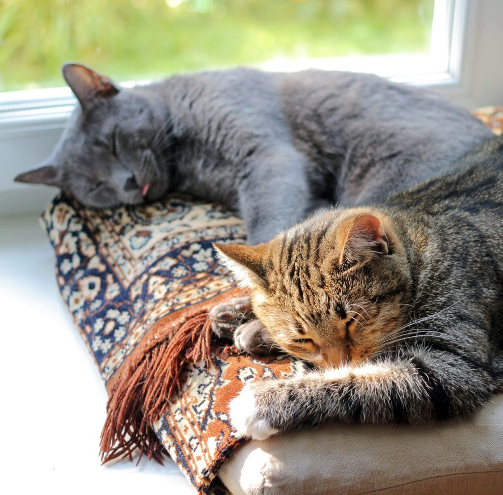 Two cats sleeping on same bed