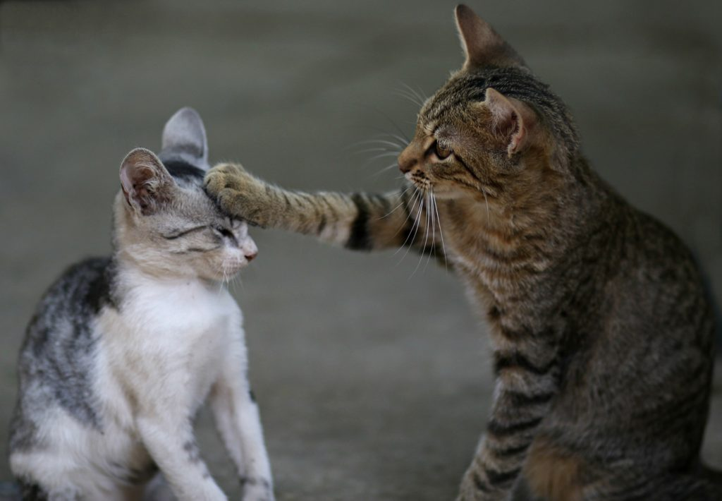 One cat patting another on the head with their paw.
