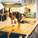 Cat on Kitchen Counter