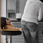 Cat on Stool in Kitchen