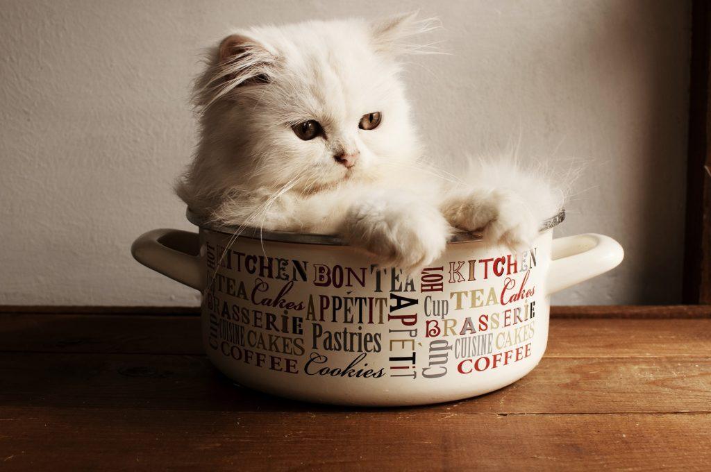 White kitten sitting in a pot