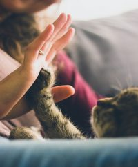 Cat and Woman High Five