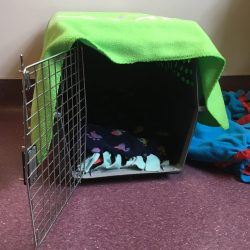 Cat carrier turned into hiding place and perch