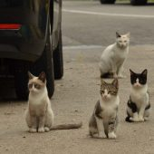 Group of Outdoor Cats